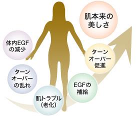 体内EGFの減少 → ターンオーバーの乱れ → 肌トラブル(老化) → EGFの補給 → ターンオーバー促進 →肌本来の美しさ